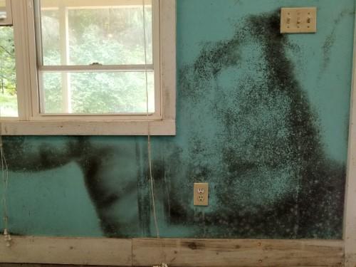 black mold removal Nashville TN