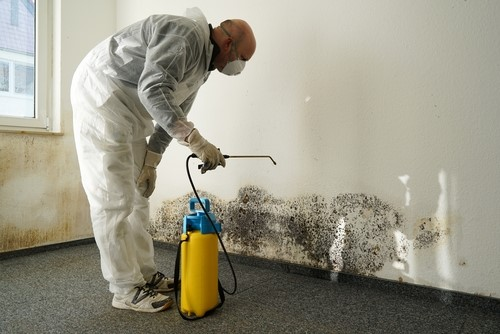 mold removal company Nashville